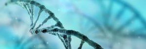 chromosomes and prader-willi